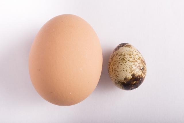 鶏卵とうずら卵