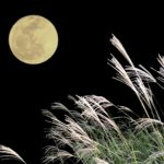 月見 ススキ