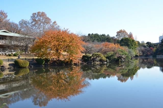 新宿御苑 池